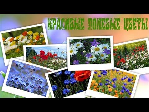 Полевые цветы фото от DOMIKru net
