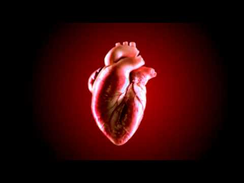Animated human heart - photo#14