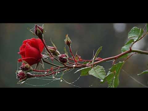 Ноябрь  —Все остыли краски —  Наталья Мурадова — читает Павел Беседин