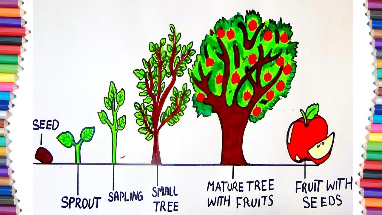 HOW TO DRAW LIFE CYCLE OF A TREE - YouTube