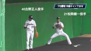 2016年2月2日。 古野正人投手、松岡健一投手のピッチング練習。 成瀬善...