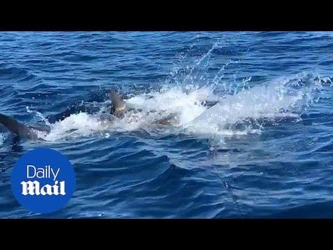 Ψάρεμα στη θαλάσσια υπηρεσία γνωριμιών Dating στη Φλόριντα