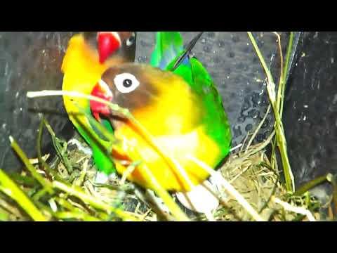 African Birds Suheb