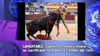 LAMENTABLE; Cuando un torero muere  es sacrificada la madre y familia del toro