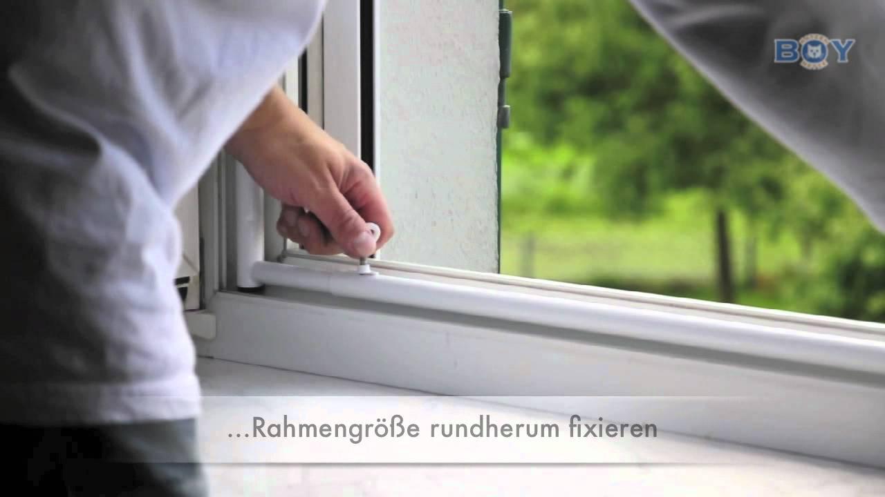 Boy Katzennetze Fenstersicherung Mit Schutznetz Im Rahmen Youtube