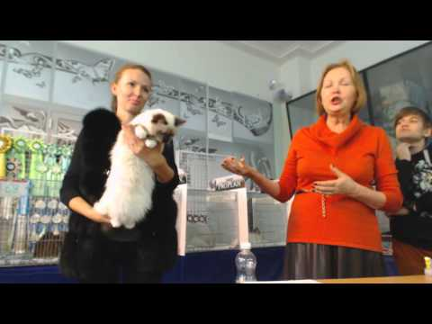 International Cat Show WCF, Kiev (Ukraine) Club Пан Коцький - 11 october 2015 (part 3/6)