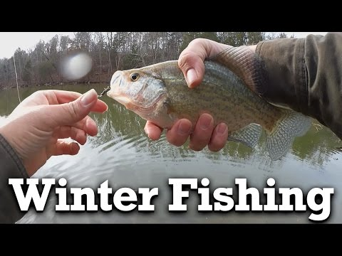 Getting Cold Water Fish To Bite - Bluegill, Bass, And Crappie Fishing In Winter!