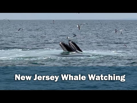 Hoboken Resident Captures Video Of 3 Whales Eating During Fishing Trip On Jersey Shore