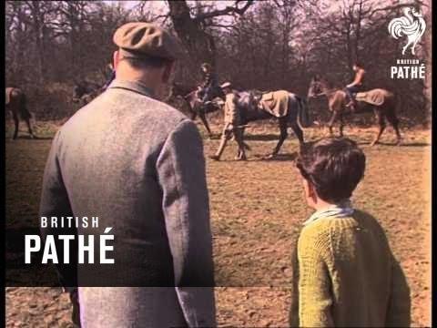 Training Race Horse (1965)