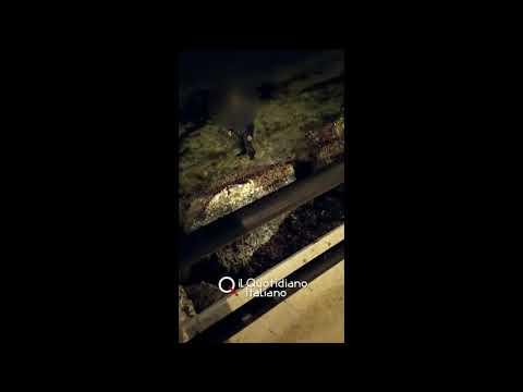 Uomo spaesato in mare di sera: scomparso ritrovato a Bari grazie al video sui social