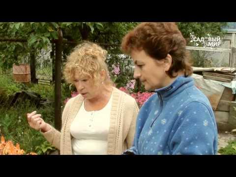 видео: Неприхотливые садовые растения. Сайт