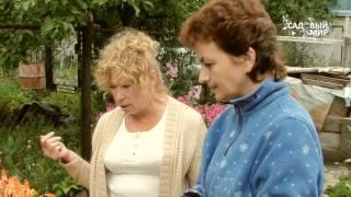 """Неприхотливые садовые растения. Сайт """"Садовый мир"""""""