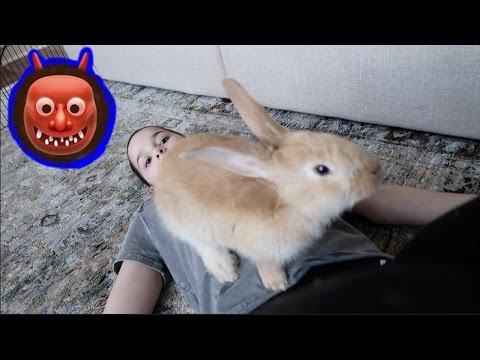 Monster Bunny! 👹 (WK 324.5) | Bratayley