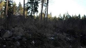 Katla-bretagnenbassetti metsäjänisajossa