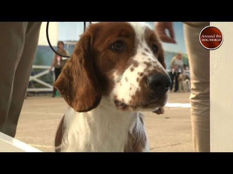 Around the Dog World Teaser - Hound & Gundogs