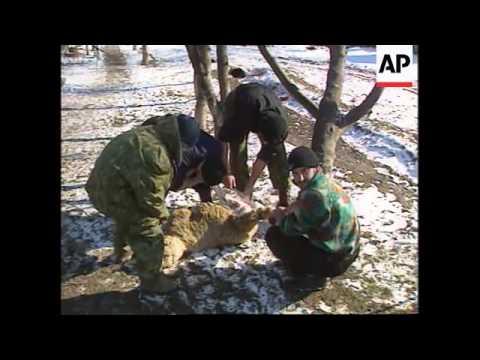 Chechnya - Celebrations start