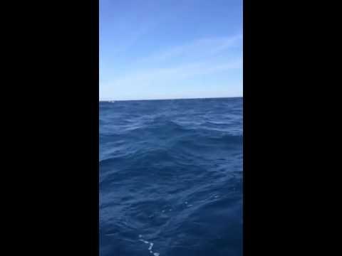 Delaware jet ski fishing- 35 miles offshore