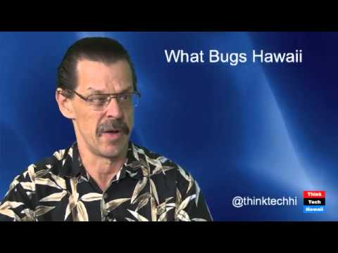 What Bugs Hawaii - Dr. Daniel Rubinoff