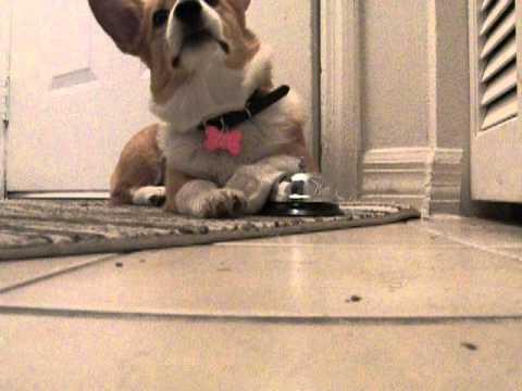 Ring A Bell Trick Dog Training Doovi