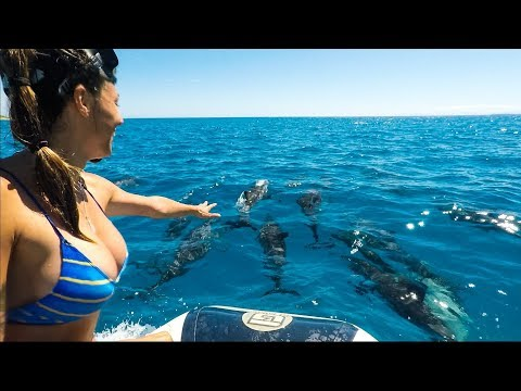 Dolphins Everywhere! We are the Dolphin Kings!! Sailing Nandji, Ep 47