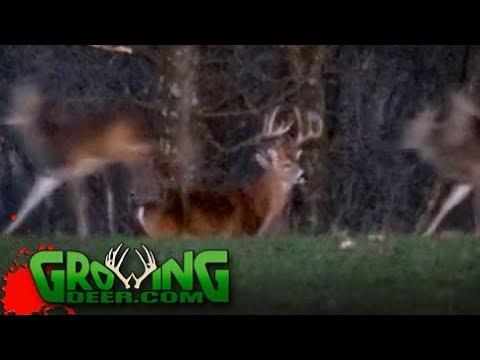 Hunting Strategies for Deer On a Food Cover Pattern (#422) @GrowingDeer.tv