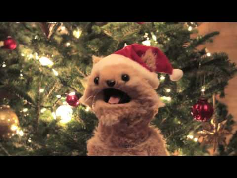This cat is NED Christmas Spectacular