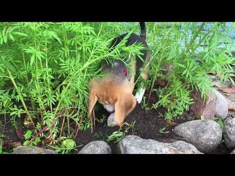 Larry ogrodnik