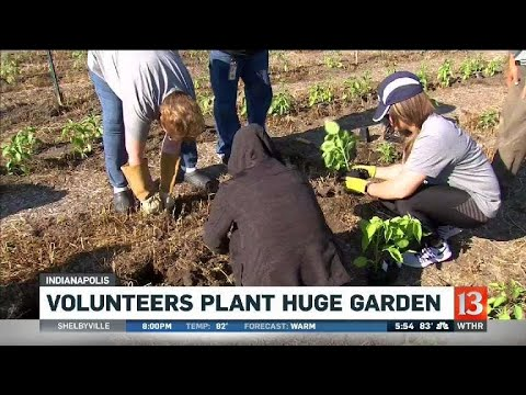 Volunteers plant garden to fill food bank