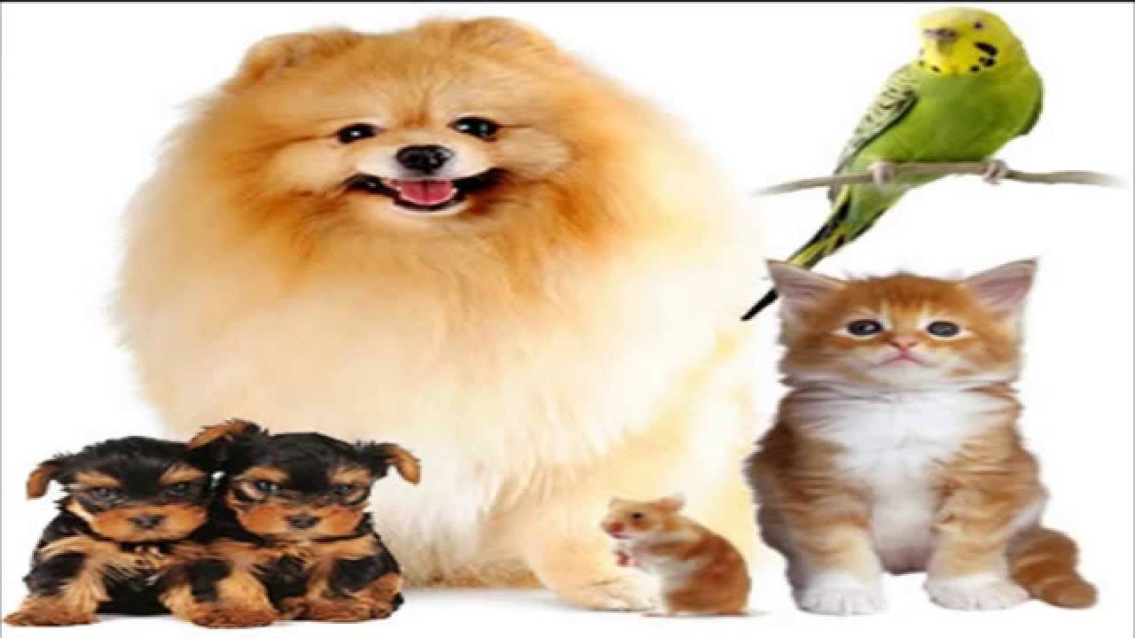 Las mejores mascotas para tener en casa youtube - Perros para tener en casa ...
