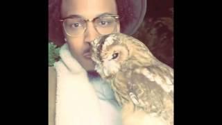 #AugustAlsina #Illuminati symbol exposed! Singer - Rapper posts video holding an owl! Moloch?
