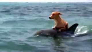 Dolphin saving a dog
