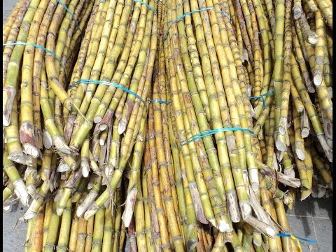 Bioethanol plant project in Cambodia looking for funding