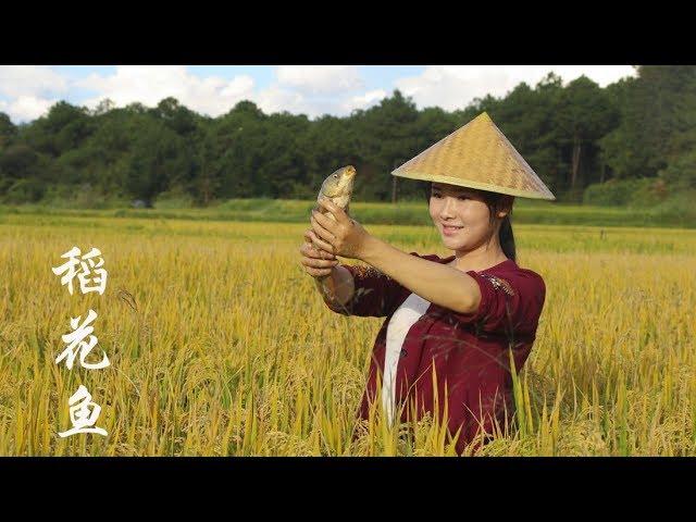 金秋十月,稻花鱼肥,煮一锅酸木瓜鱼【滇西小哥】
