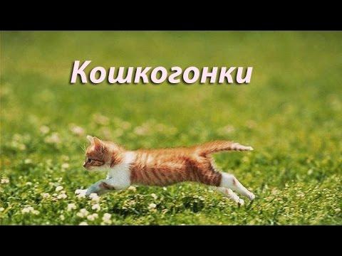 Team Drift Cats - Кошачий дрифт!