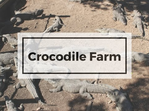 Visiting Crocodile Farm in Bay of Pigs, Cuba