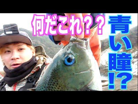 釣りよか初のフカセ釣りで青い瞳の魚が釣れた!