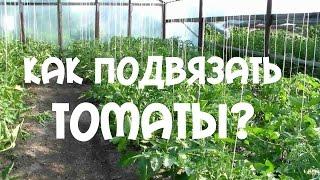 Подвязка помидор в теплице. Как правильно  подвязывать томаты(Подвязка помидор в теплице. Как правильно сделать подвязку томатов . Куст с томатами нужно подвязывать..., 2015-06-28T15:53:46.000Z)