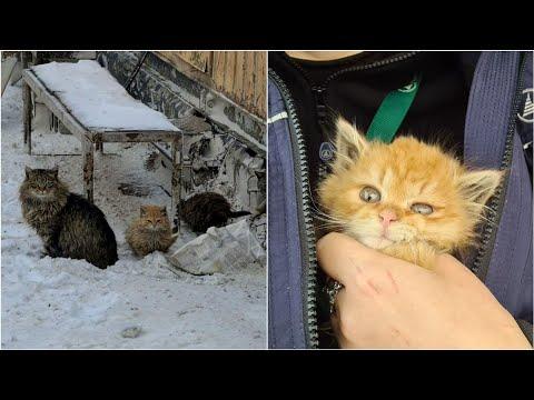 Три маленьких новогодних чуда для трёх маленьких котят. Судьба лютокотиков из аэропорта
