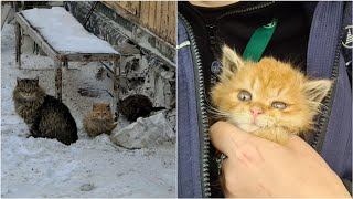 Three little Christmas miracles for three little kittens. The fate of kittens from the airport