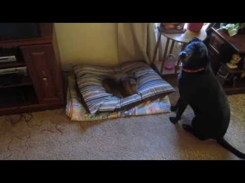 Смешные кошки спят на месте для собак. Подборка Топ 7