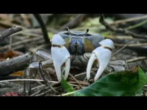 Island Explorer Holidays Cocos Keeling & Christmas Island Travel