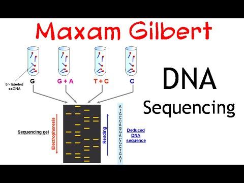 Maxam gilbert DNA sequencing method