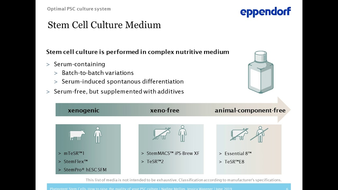 Pluripotent stem cells: How to raise the quality of your PSC culture