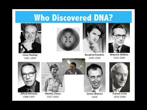 History & Discovery of DNA - YouTube