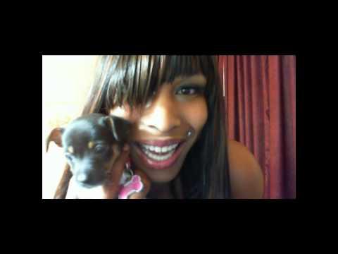 "Thank you all!! Meet PRECIOUS my teacup Chihuahua""Luxury D Love"" at www.TsLuxuryD.com"
