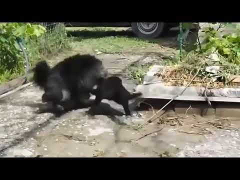 Best Funny Cats Compilation August 2015