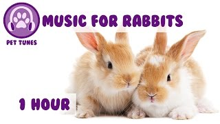 1 Hour of Rabbit Music! Music to Relax and Calm Your Pet Rabbit.