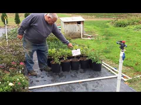 How to Turn 50 Sticks into Thousands of Plants You Can Sell for $5.97 Each