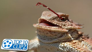 Top 10 Oddest Animal Traits - Weird and Strange - TOP 10 CLIPZ