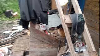 Собаки   Западный переулок в Вологде